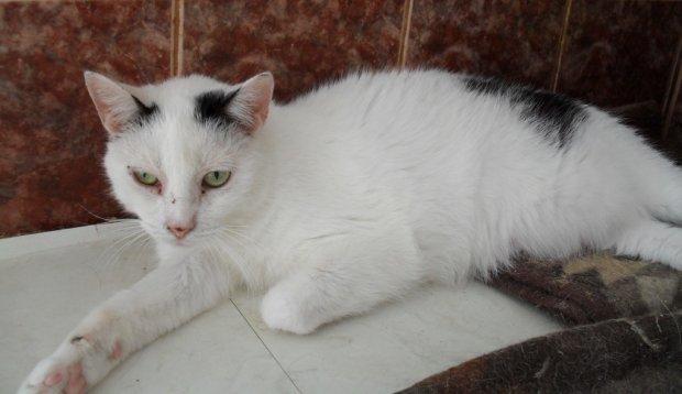 Bobuś, kot do adopcji, ma 15 lat, lubi się tulić, mruczeć, ale boi się obcych.