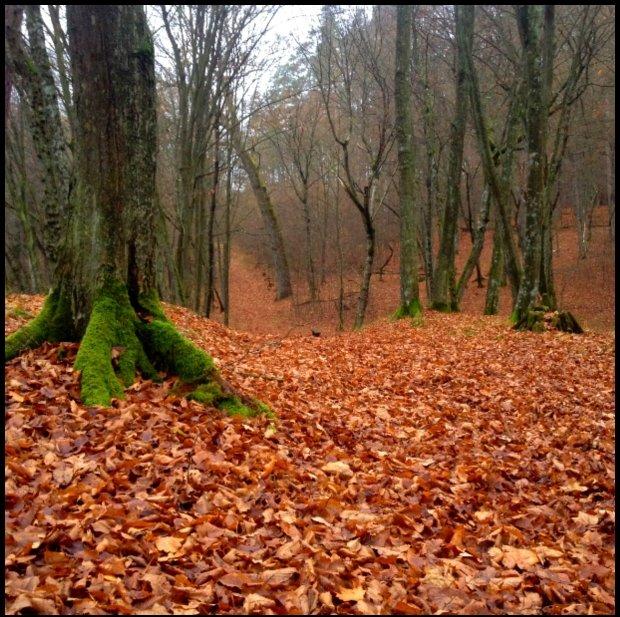 Taki park jesienny w świetle dnia (krótkiego)