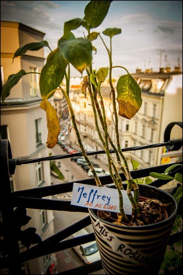 Jeffrey - jeden z zaadoptowanych już wychowanków Natalii fot. Schronisko dla niechcianych roślin