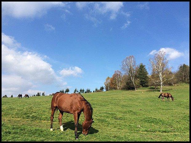 Wszedzie te konie i konie (Fot. Natalia Sosin)