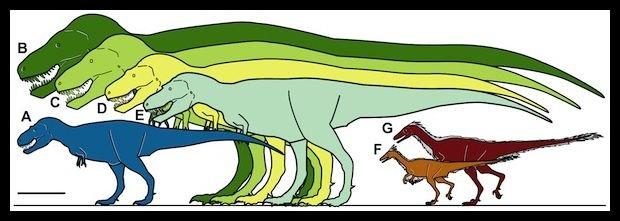 Nanuqsaurus to ten niebieski, dla porównania typowe T-Rexy to obiekty B i C