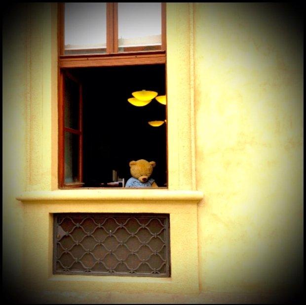 Miś z okienka - tylko dla tych, co się rozglądają / fot. Gosia Tchorzewska
