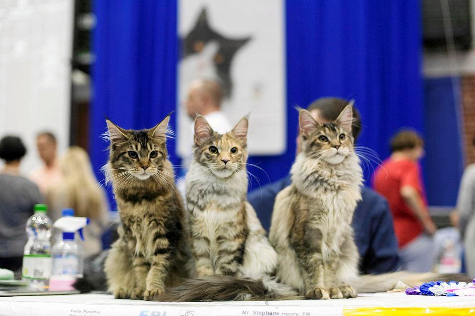 Inne rodzaje Blisko 240 kotów i 130 wystawców. W Gdańsku odbyła się Wystawa VS75