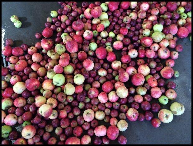 Kwaśne jabłka - to podstawa (Fot. NS)