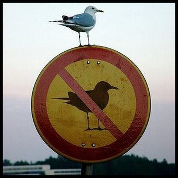 To ty ustalasz zasady!