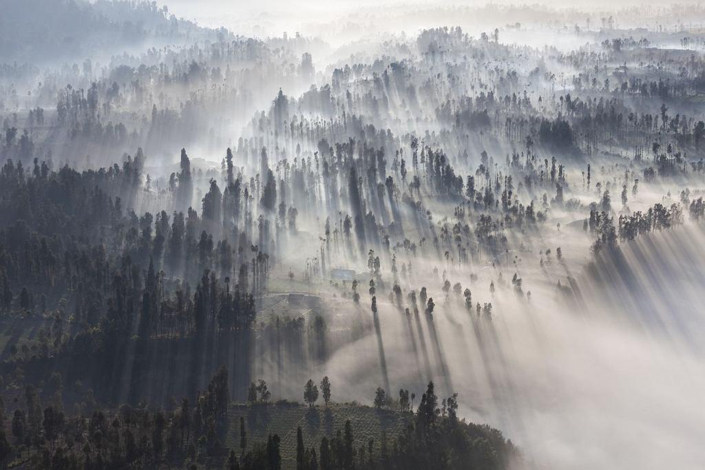 W naturze korzenie drzew rozrastają się na ponad siedmiuset metrach kwadratowych (fot. Saiko3P / iStockphoto.com)