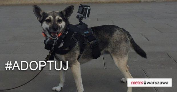 Essie, pies z kamerą, nagrał film o Warszawie