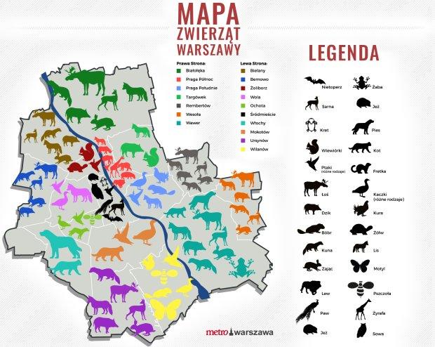 Świstuny, lisy, wydry. Jakie zwierzęta żyją w Warszawie? Zdziwisz się [MAPA ZWIERZĄT]
