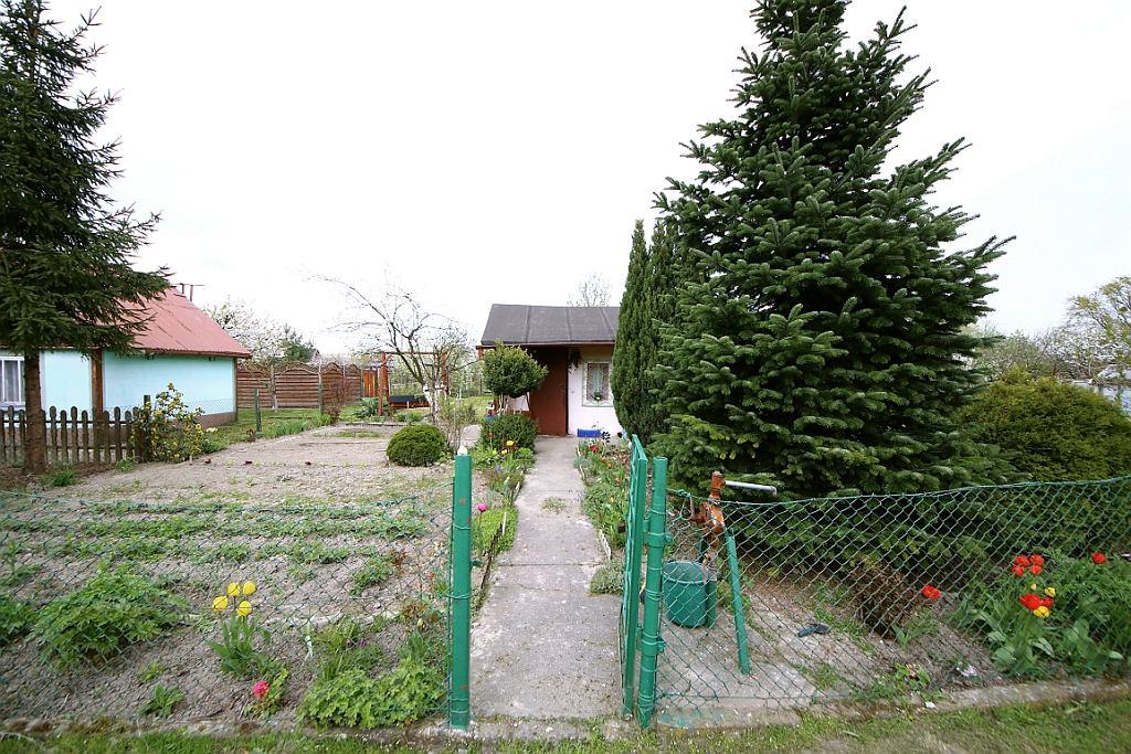 Ogród działkowy, w którym Kazimierz Domański miał doznać objawień (fot. Wojciech Mazan)